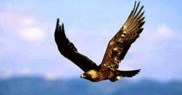 vuela como jamas has volado hacia tu éxito